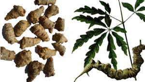 Thuốc bắc và thuốc nam khác nhau như thế nào